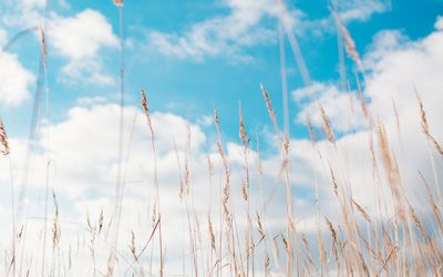 Reduce hay fever complaints with air purification