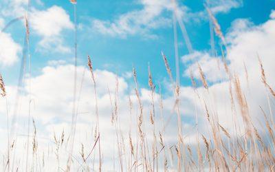 Hooikoortsklachten verminderen met behulp van luchtreiniging